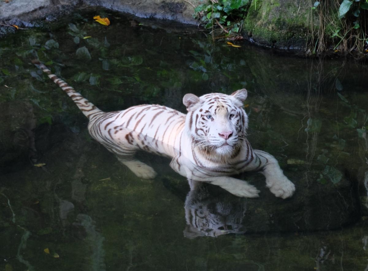 Zoo po raz drugi:)