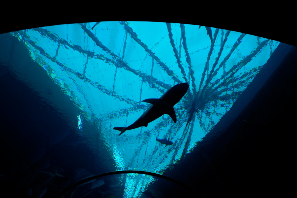 S.E.A Aquarium – kolejny hit:)