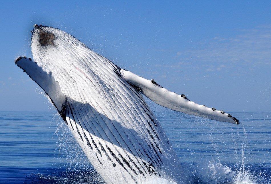 Zobaczyć wieloryba :)